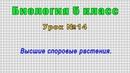 Биология 5 класс Урок№14 - Высшие споровые растения.