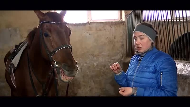 Дурные привычки лошадей