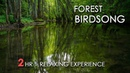 Forest Birdsong - Relaxing Nature Sounds - Birds Chirping - REALTIME - NO LOOP - 2 Hours - HD 1080p