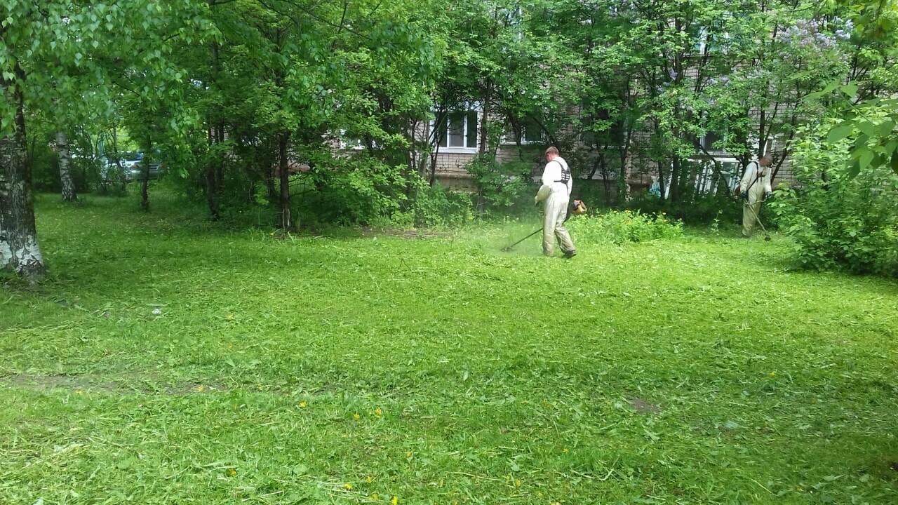 произведён покос газонов на придомовой территории жилых