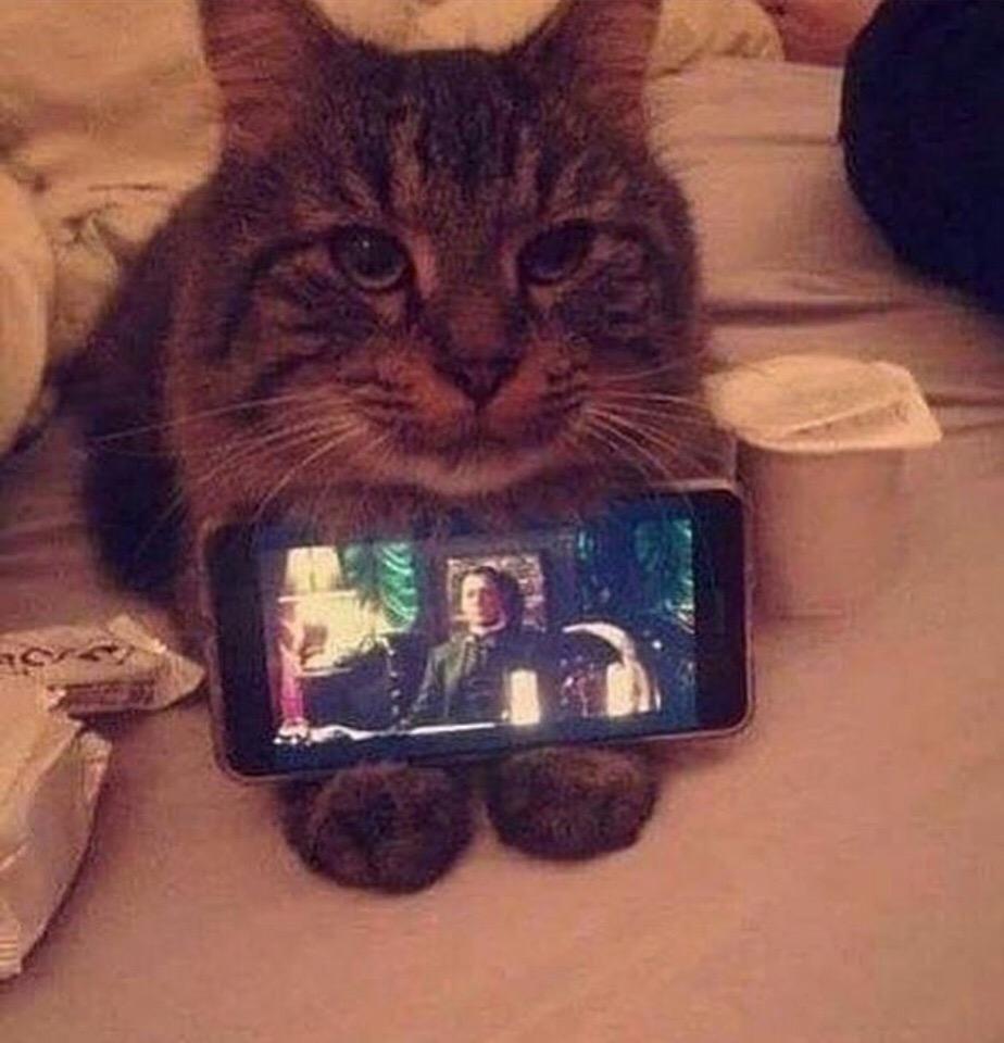 Котик - это удобно