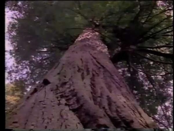 Redwood Summer: Where the 90s Begin