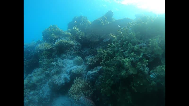 Подводный мир на Мальдивских островах