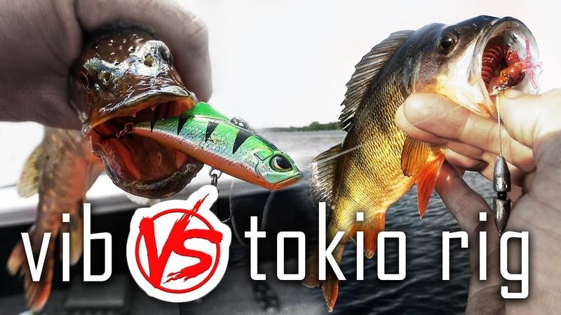 Бешеный клев в жару Раттлин или Токио риг На что ловить окуня судака и щуку