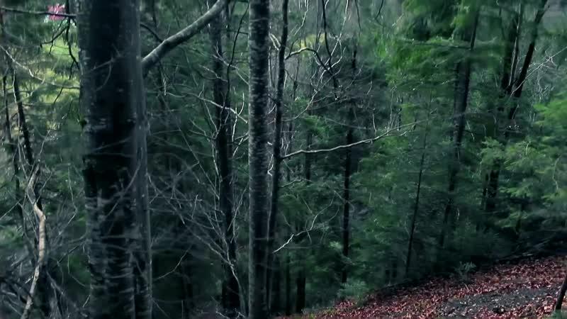 Олександр Кварта Смерека Official video